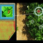 Why Monsanto Invested in Ag Image Analytics Company Resson