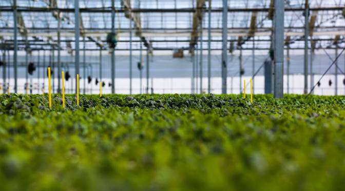 BrightFarms Funding Success: It's All In The Business Model