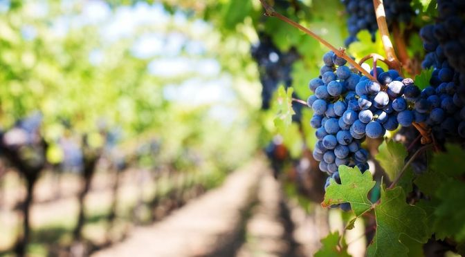 Exclusive: Biome Makers Raises $2.2m for Microbe Database Service for Vineyards