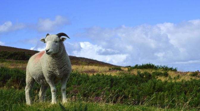 Advice to UK Farmers: Make the Most of These Good Times Before Brexit