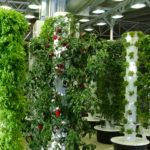 5 Online Platforms Helping Future Indoor Farmers
