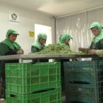 UPDATE: InspiraFarms Adds €2.5m to Series A for Cold Storage and Processing Tech in East Africa and Central America