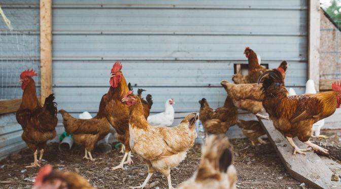 Poultry Manure-to-Fuel Biz BHSL Raises $7.9m, Acquires Hydro International
