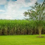 Brazil's First Agtech Accelerator Program Pulse Seeking Startups