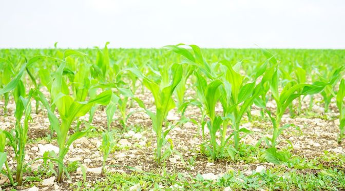 Disruptive Crop Insurance Startup Crop Pro Raises $8m from Agtech VCs