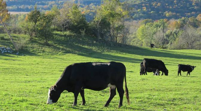 What Does the Amazon, Whole Foods Deal Mean to an Organic Farmer in the Hudson Valley?