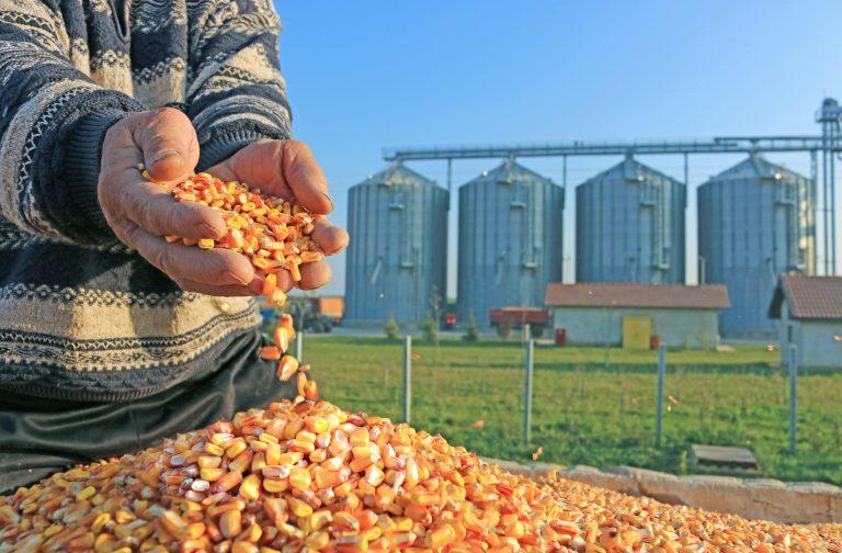 Agrifood Companies