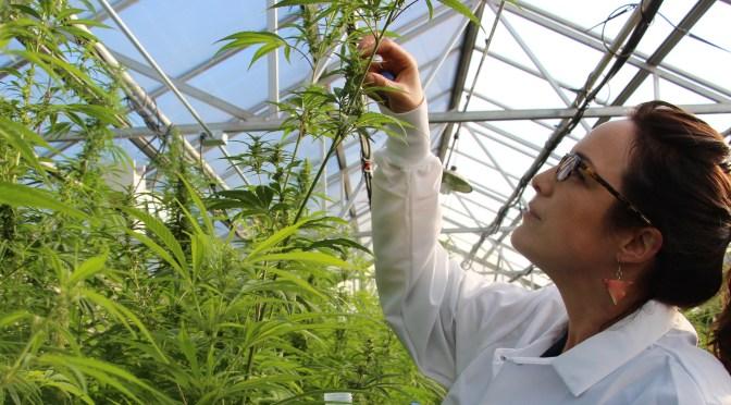 Women in Agtech: Wendy Mosher of New West Genetics on Women in Cannabis