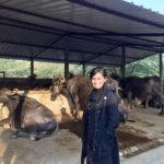 TPG Rise Fund's Agriculture Lead Discusses First Investment in Indian Dairy