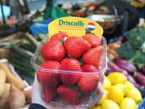 Driscoll's