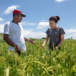 Bayer, Netafim, Swiss Re, and IFC Team-Up to Bring New Tech to Smallholders