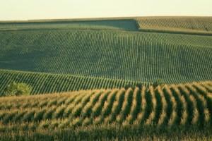 farmland investor