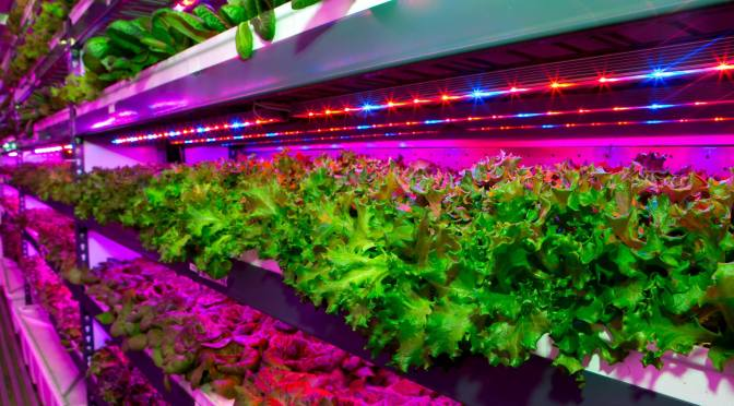 Crop One Signs $40m JV with Emirates to Build World's Largest Vertical Farm