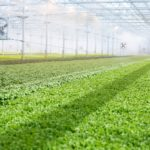 BrightFarms Doubles Funding with $55m Series D