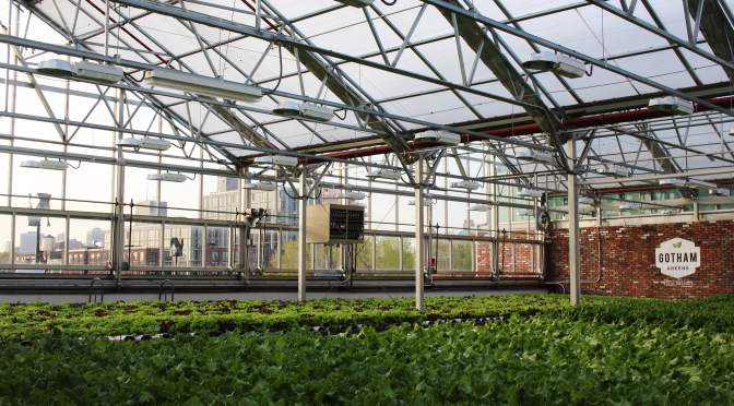 BREAKING: Gotham Greens Raises $29m Series C for Urban Greenhouses