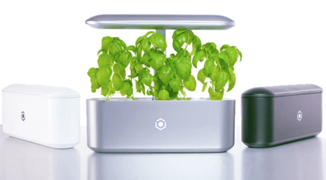 Ava Technologies Raises $2m Seed Funding for Smart Indoor Gardens