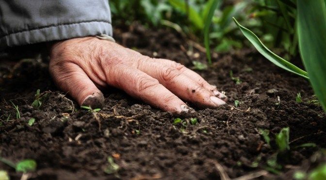 Senate Passes Farm Bill with Incentives for Farmers to Build Soil Health, Sequester Carbon
