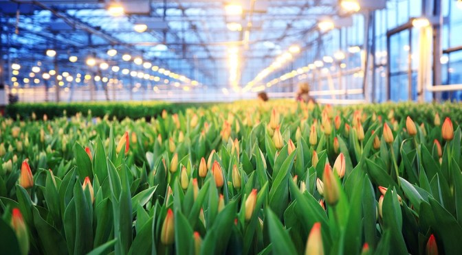 Report: Going Dutch Could Drive the Future of Australia's AgriFood Sector