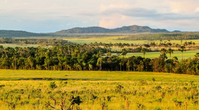 Investors and Food Companies Join Forces to Tackle Brazil Deforestation