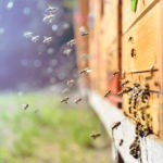 Oracle Partners with World Bee Project to Monitor World's Declining Bee Population