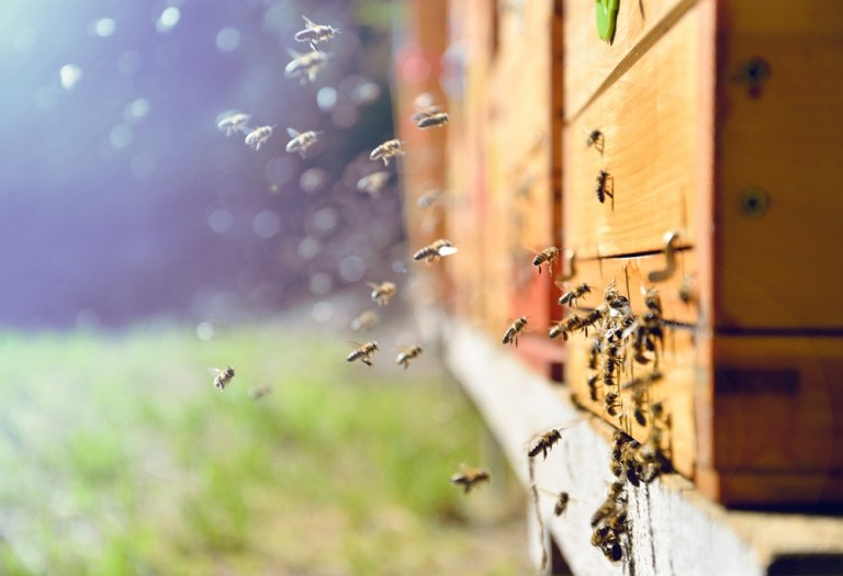 the world bee project hive network