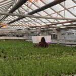 CoverCress Raises $2m to Develop Gene-Edited Cover Cash Crop