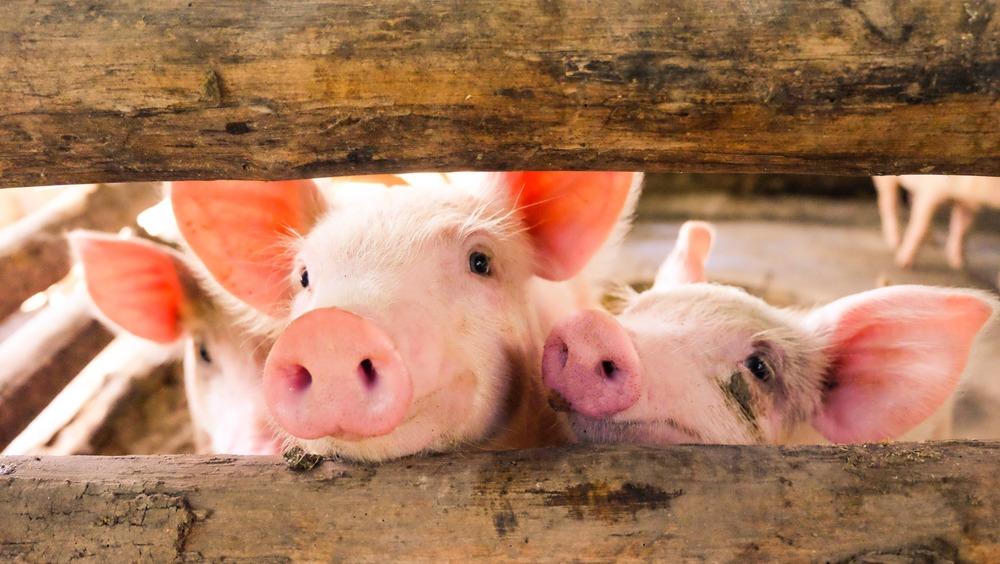 pork checkoff