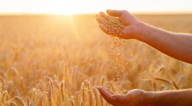 FarmLogs Launches AutoHedge App to Help Farmers Market Their Grain Before Harvest