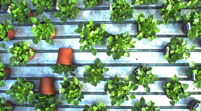 "iUNU Raises $7.5m for Greenhouse ""System-as-a-Service"" Tech Platform Using Computer Vision"