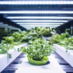 What is the Future of Container Farming?