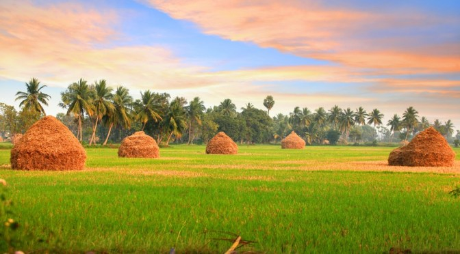 AgTech Spotlight: TheKrishi App Wants to Help Indian Farmers Increase Their Income