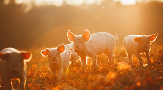 Moink Wants to Help Small-Scale Regenerative Farmers Get Fairer Prices