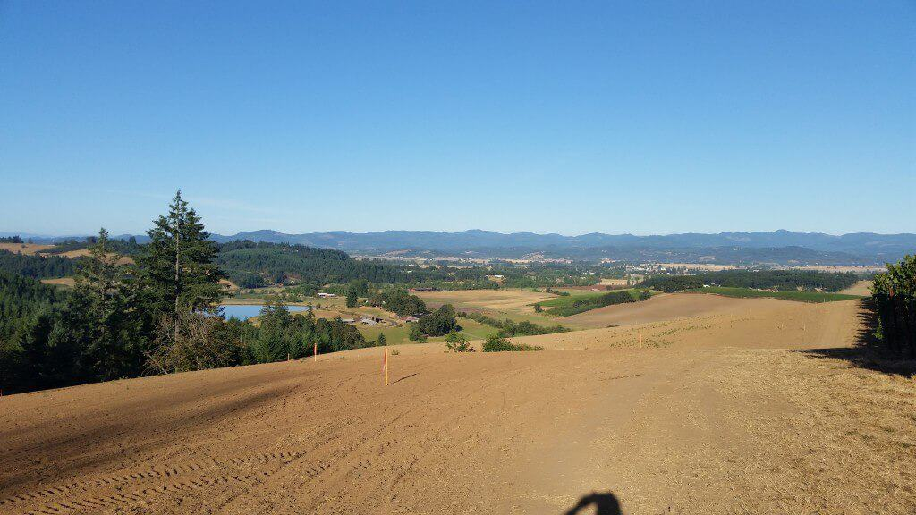 View from top of the Vineyard