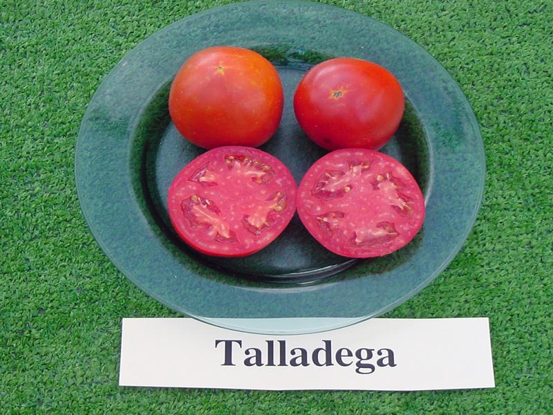 Celebrity Tomato Information