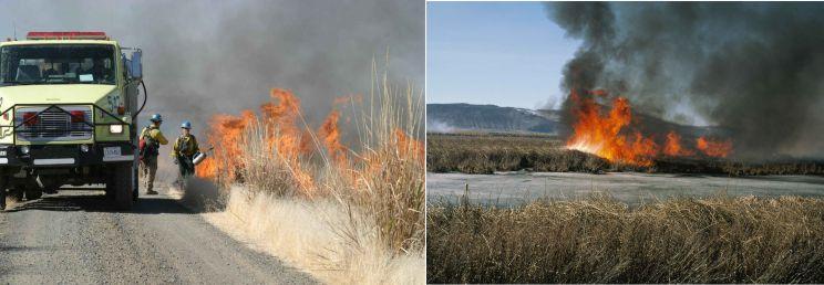 firebreaks with AggreBind soil stabilization
