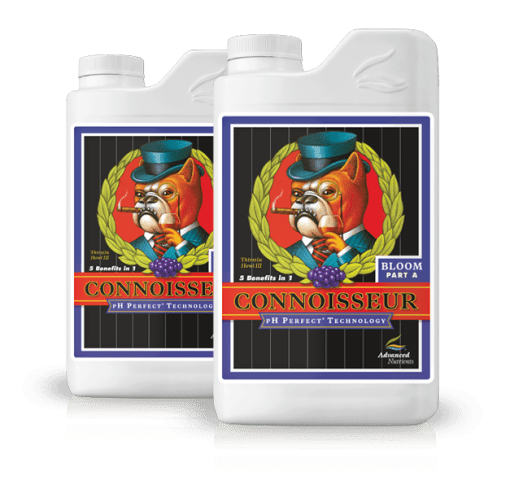 Connoisseur Bloom A & B