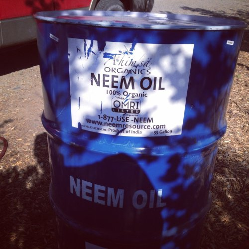 Neem Oil – Wild Harvest From India