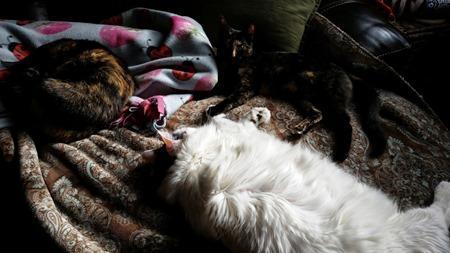 sunningcats