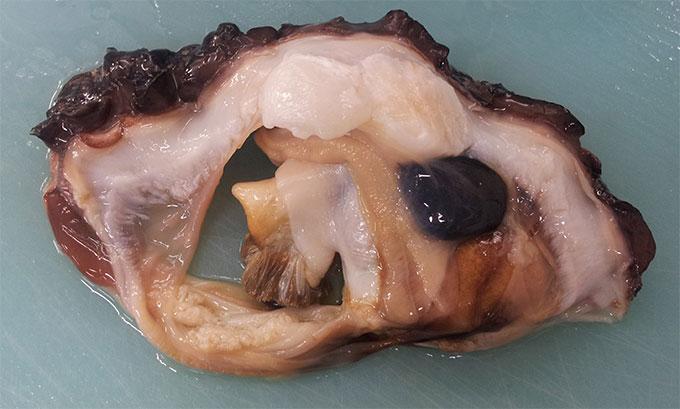 しゃこ貝殻から取り出した身