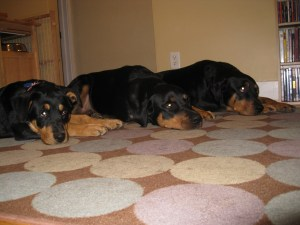 From L-R Daisy, Abby, Kalil
