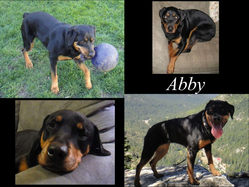 abby_collage