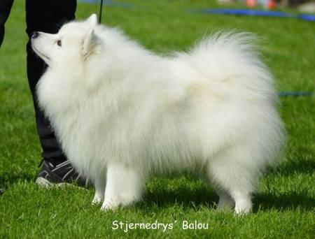 Stjernedrys' Balou