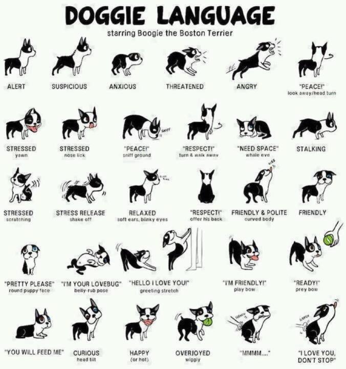 Dog_language
