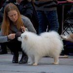 En lille opfølgning og kommentar fra Dansk Kennel Klub