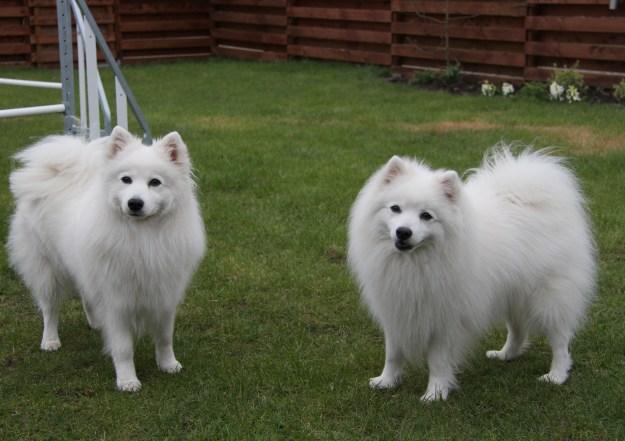 Pippi til venstre og Kioko til højre