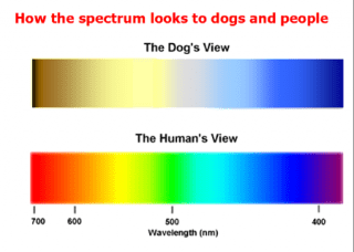 Dogs vision