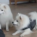 Dog Empowerment | Nytårstræning