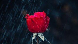大雨激情夜,聽不見的別離