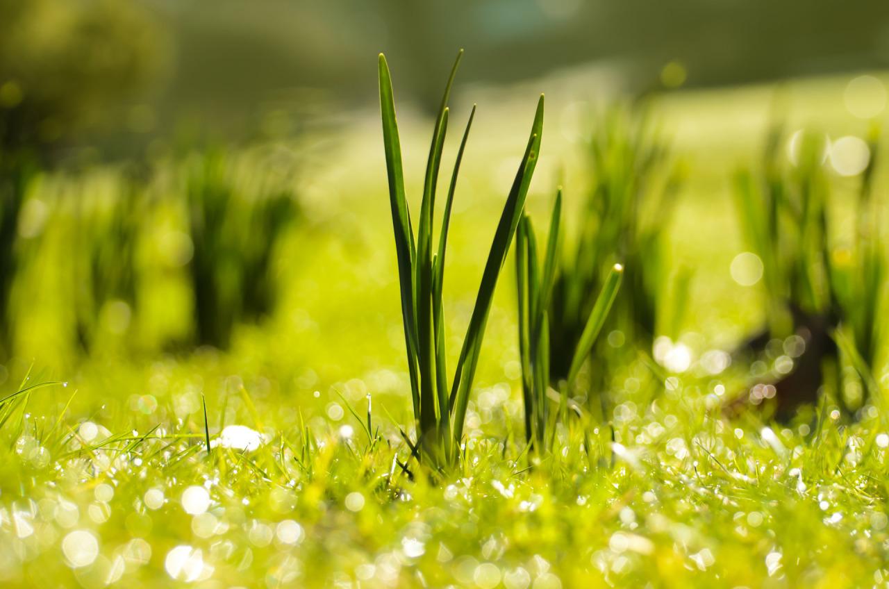 spring-1363860011cyo