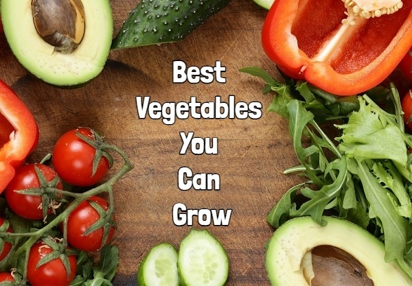 Best Vegetables For You That You Can Grow